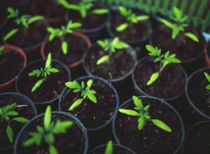 Marketing vert, une opportunité pour les entreprises de verdir leur image | Mahamadou SIMPARA | ML | FR |